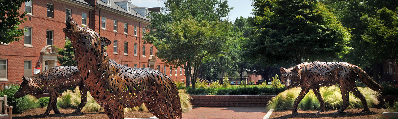 NCSU Wolves Banner